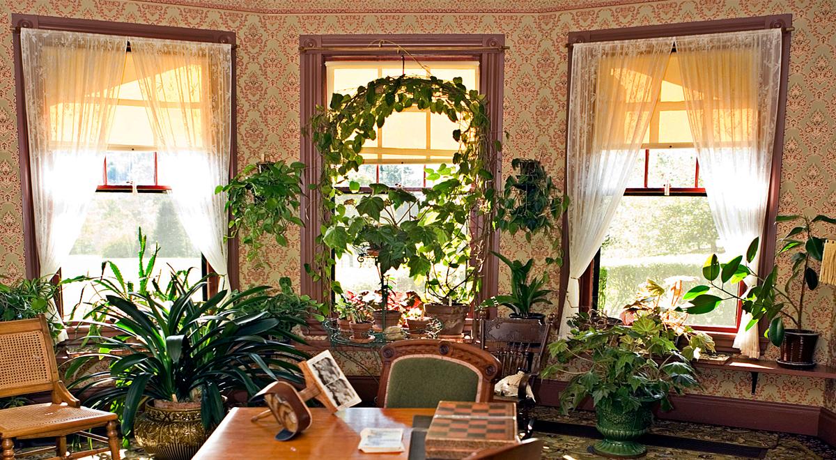 Vivaio i tre pini a ladispoli professionisti del verde e for Piante da appartamento fiorite